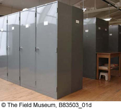 Older gray metal herbarium cabinets, placed end to end in rows.